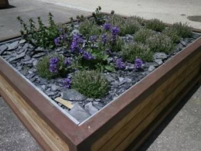 Fleurissement du village : la flore locale mise à l'honneur
